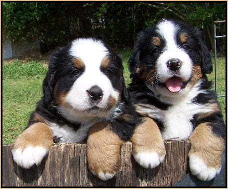 Mountain,bernese mountain dog,mountain hardware,rocky mountain atv,mountain lion,brokeback mountain,mountain ski