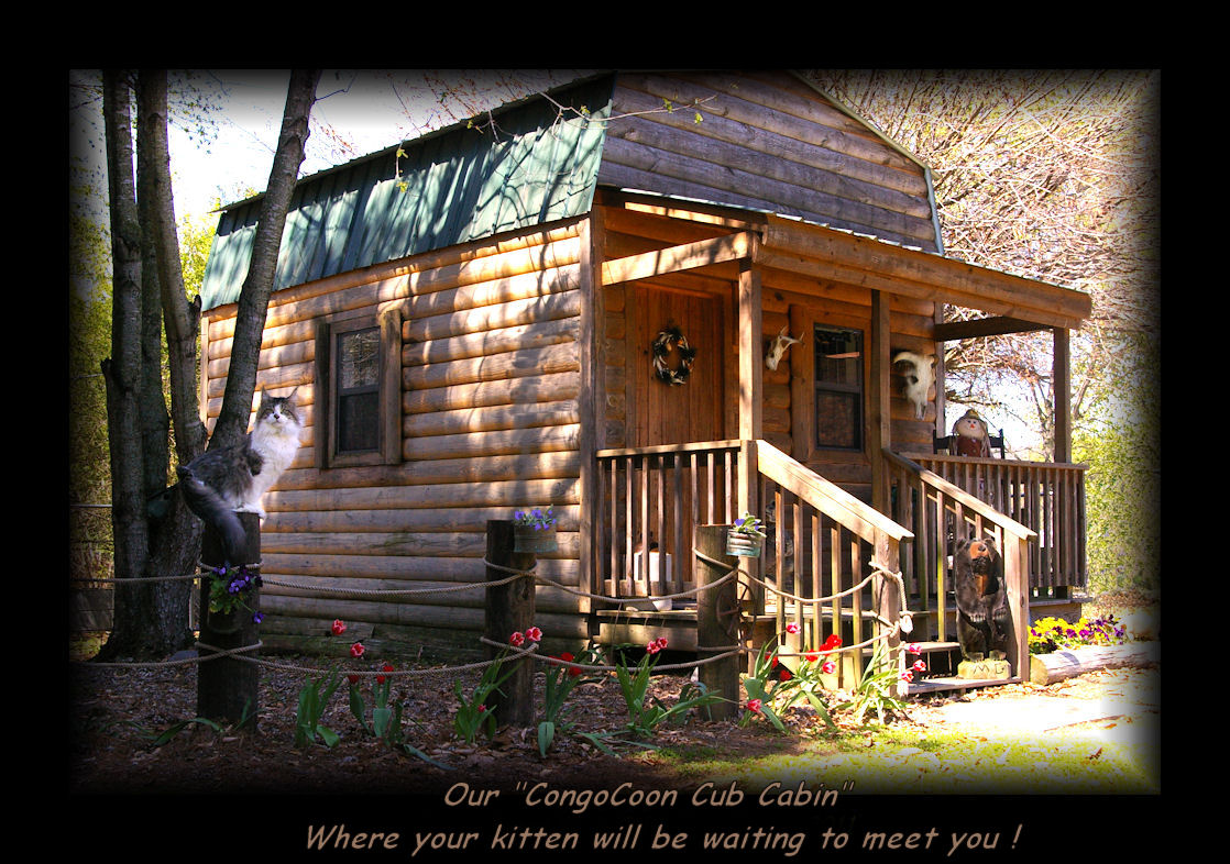 image of cabin at congocoon cattery