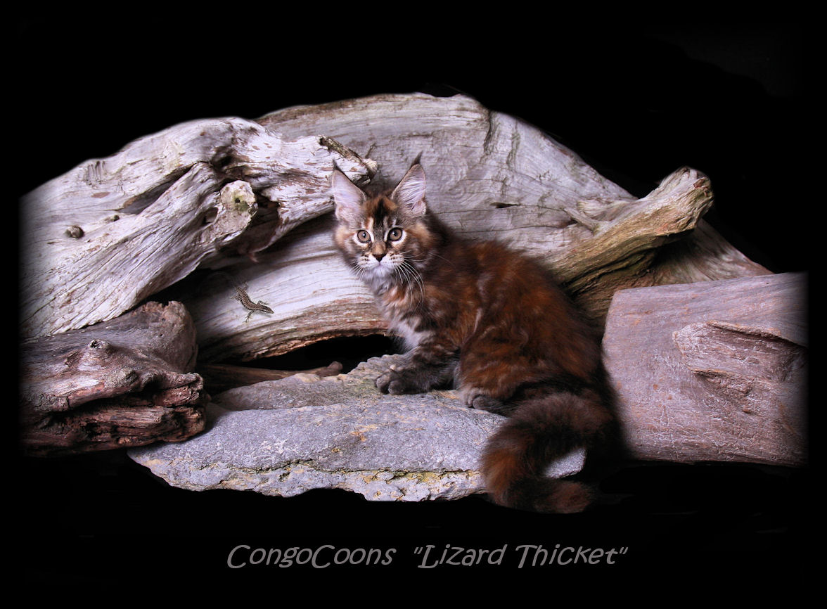 picture of a brown patched cat with lizard on a log
