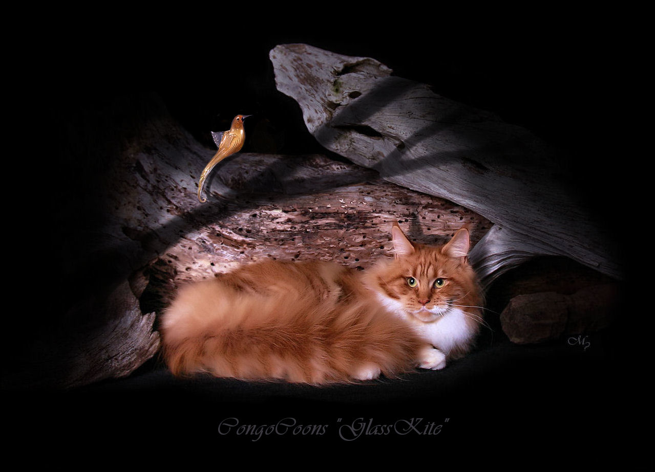 picture of a red tabby and white maine coon laying with a glass bird on a log