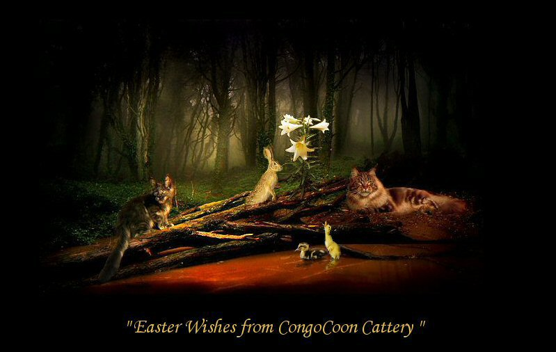 picture of two maine coon cats laying with a swamp background.